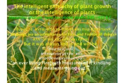 Intelligence of plants