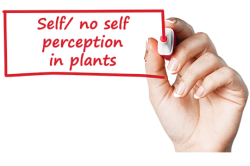Self - no self perception in plants